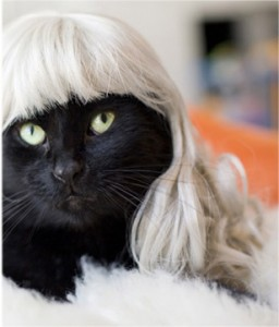 Silver fox Kittywig