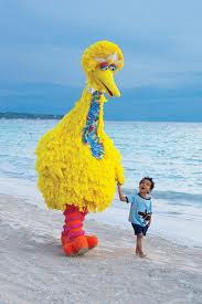 Big bird on a southern beach