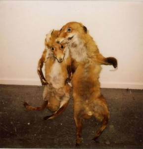 taxidermy2 weird